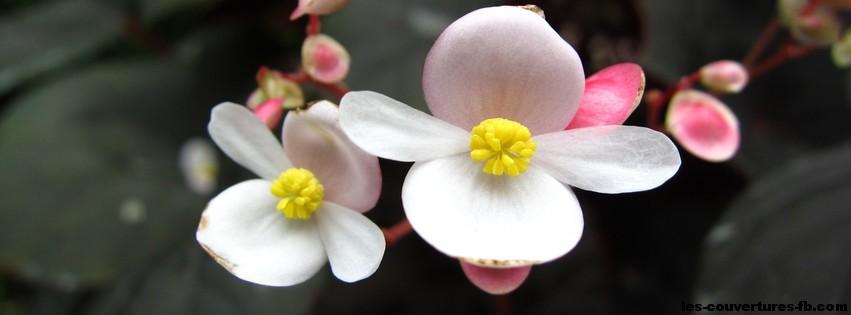 2 fleurs blanches photo de couverture facebook. Black Bedroom Furniture Sets. Home Design Ideas